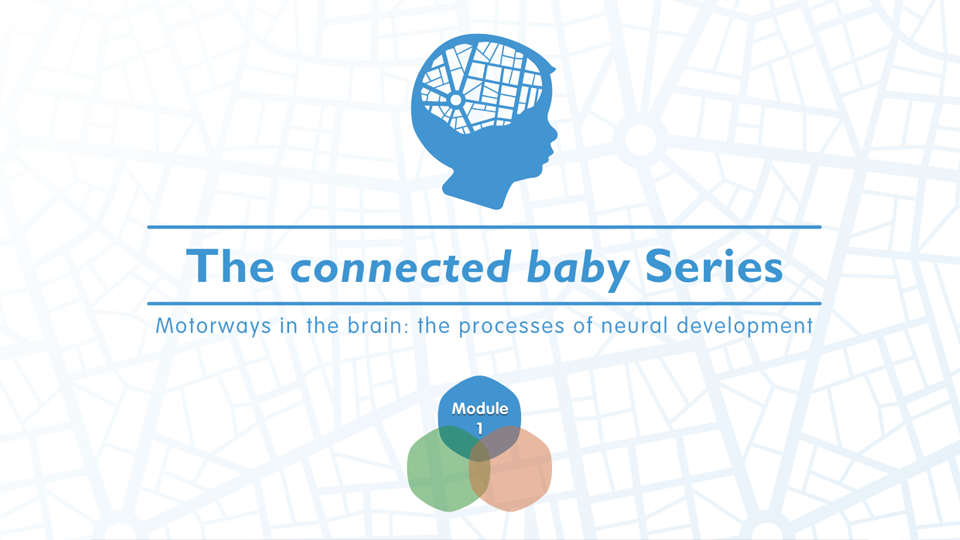 The Connected Baby Series: Motorways in the Brain - the processes of Neural Development