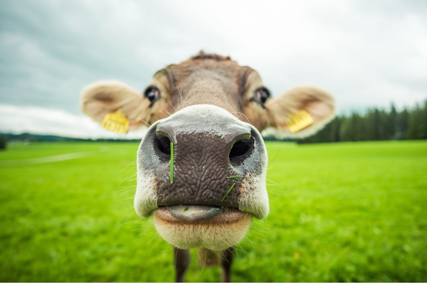 How the dairy industry is changing